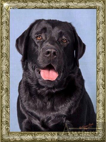 Hubert Profile Pic