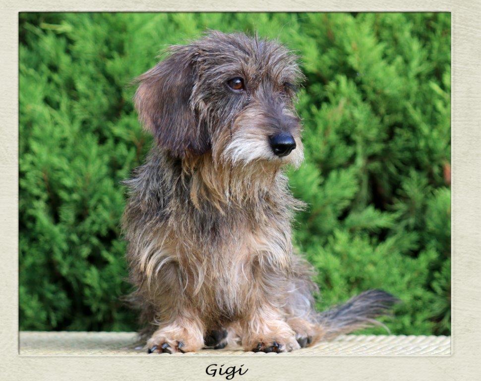 Gigi Pic 1