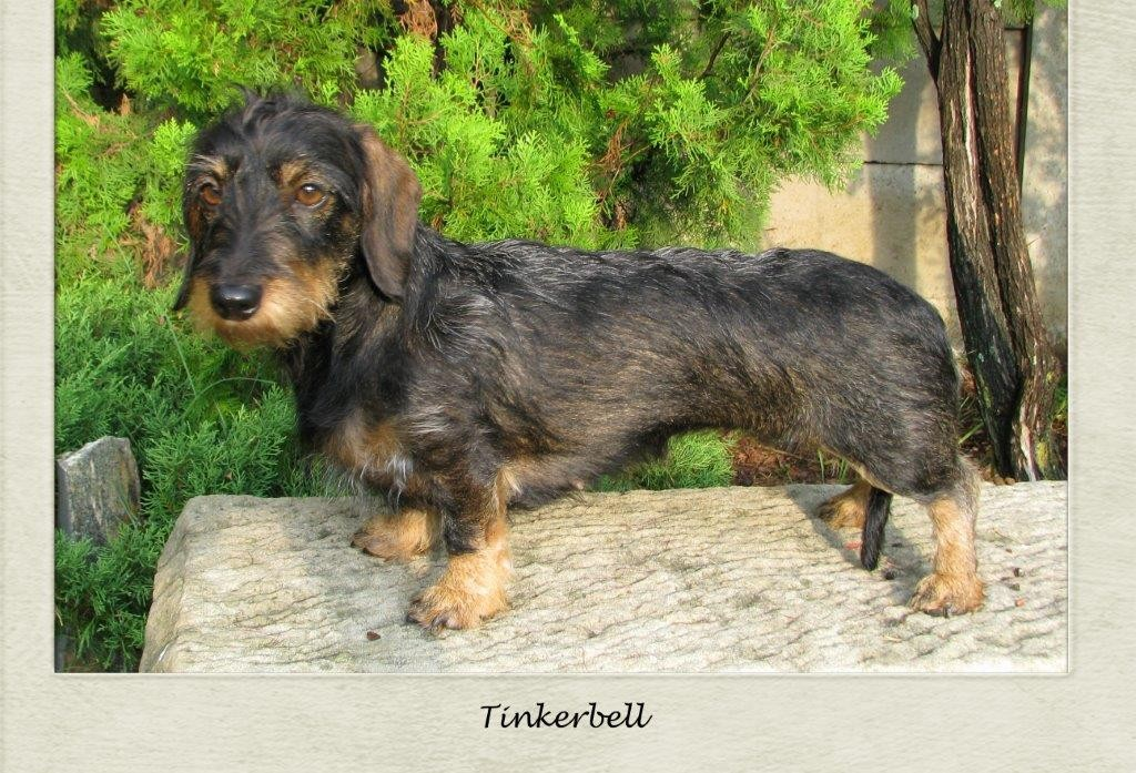 Tinkerbell Pic 1