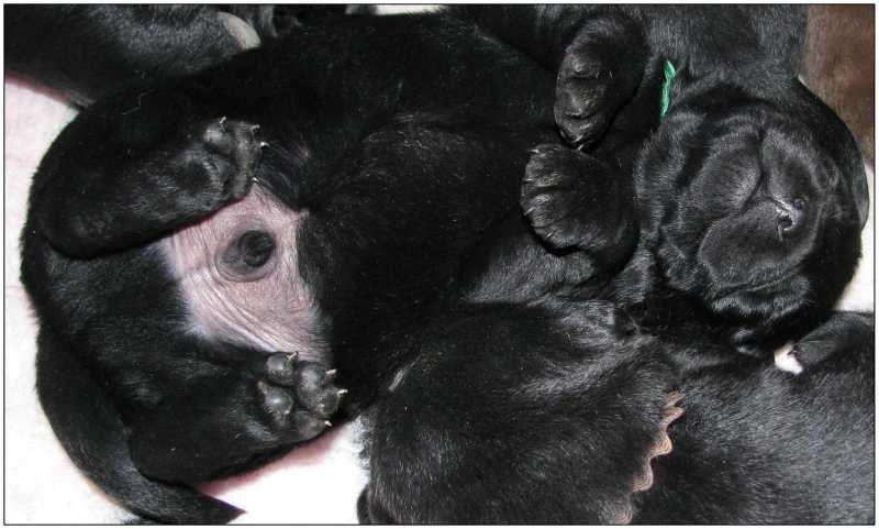2011 Puppies 2 week 5