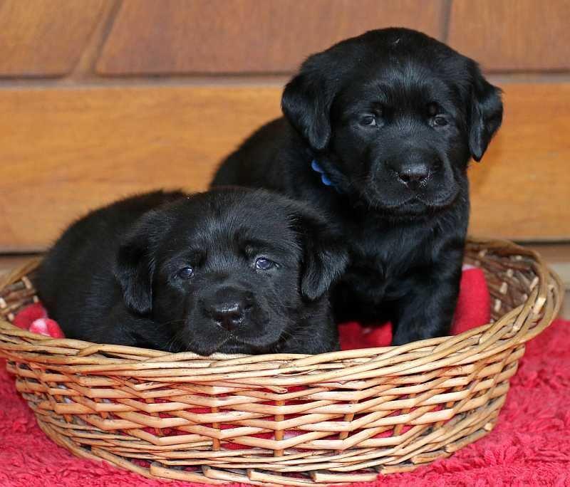Pups 11