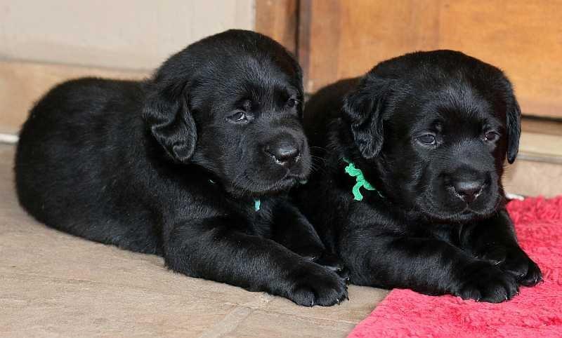 Pups 12