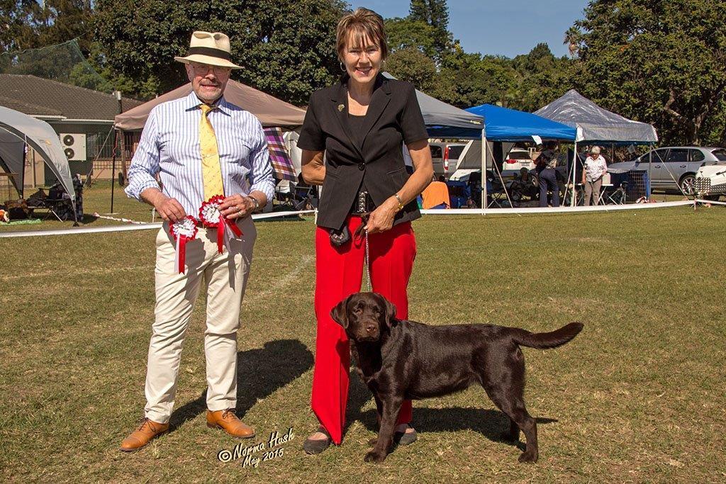 Labrador_Maggie__with Judge
