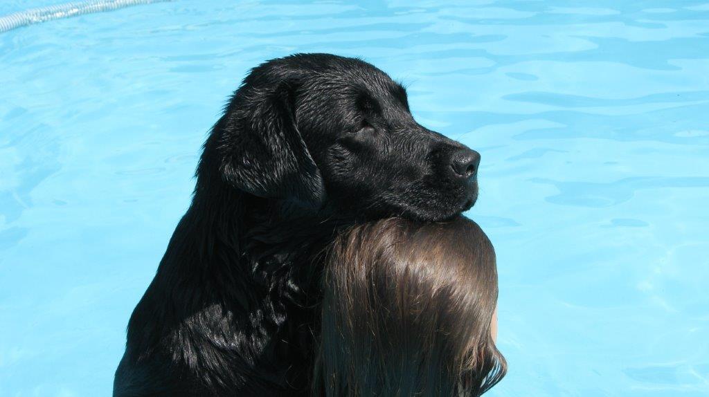 Labrador_Poplap__6605